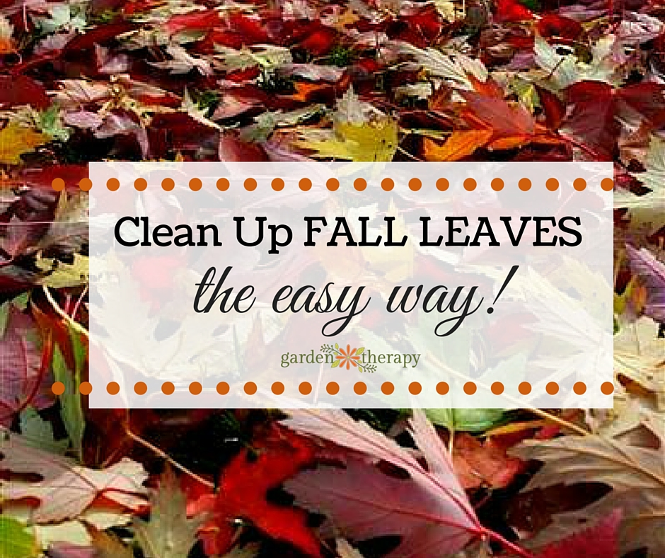Easy Way Clean Leaves
