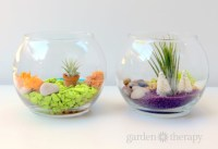 Make These Colorful Terrariums to Brighten Up Your Day!
