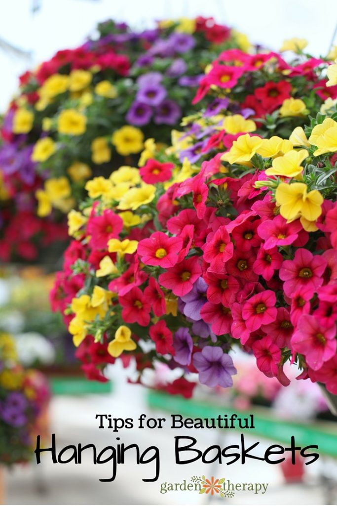 Tips For Beautiful Hanging Baskets
