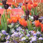 Planting Bulbs In Pots Overwinter And Grow Spring Blooms This Fall