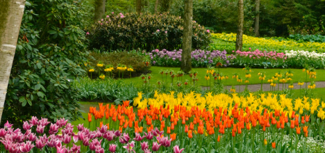 Colourful spring bulbs at Keukenhof
