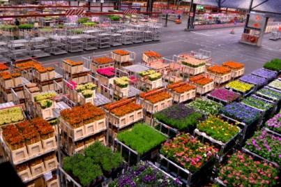 Aalsmeer Flower Market