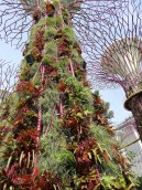 Gardens by the Bay Supertree. Photo Louise McDaid