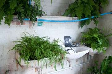 Anmnarose's fernery in the toilet 2