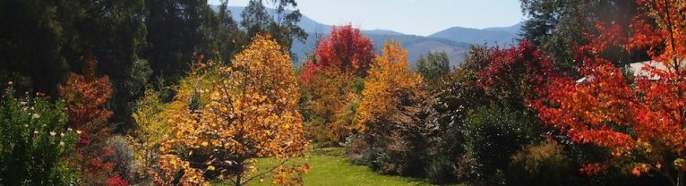 Bright autumn foliage