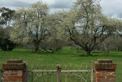 Brickendon's fruit trees