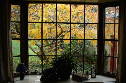 Autumn from the dining room