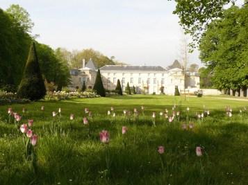 Tulips at Malmaison