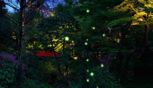 Hotel Chinzanso Tokyo fireflies