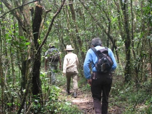Mandulkelle Tea and Eco Lodge hiking