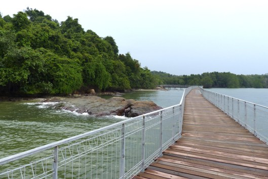 Coastal boardwalk on Pulau Ubin, Singapore. Photo Helen Young