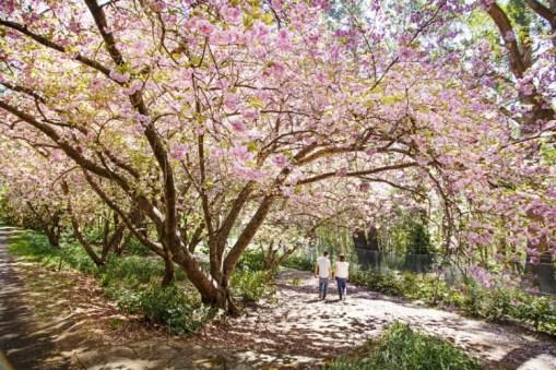 Spring in the Blue Mountains Botanic Garden Mt Tomah