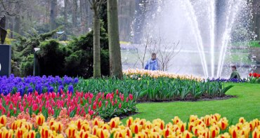 Vivid colour at Keukenhof