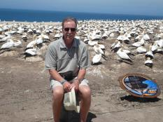 You can see gannets nesting on a safari with Gannet Beach Adventures September-April