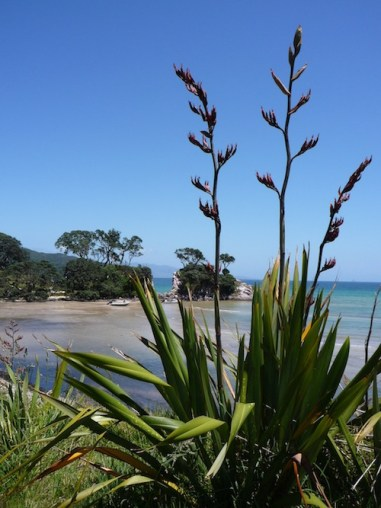 Great Barrier Island NZ