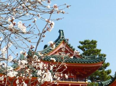 Hero Japan Sakura - cherry blossom copy