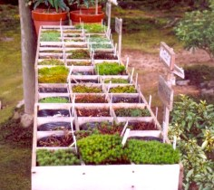 Japan mosses