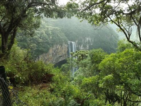 Brazilian Forest Photo pedroddf