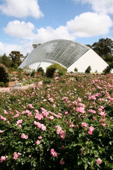 Bicentennial Conservatory glass house and rose gardens in Adelaide Botanic Gardens