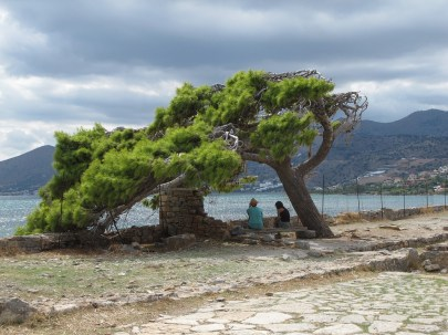 Greece - ancient windswept pine