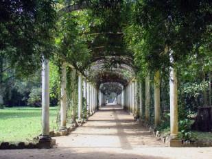 Jardim Botanico do Rio de Janeiro. Photo Rodrigo Soldon