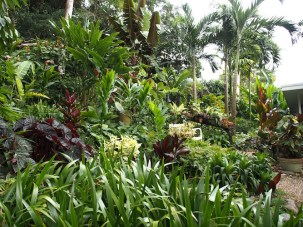 Tabu - tropical garden in Far North Queensland