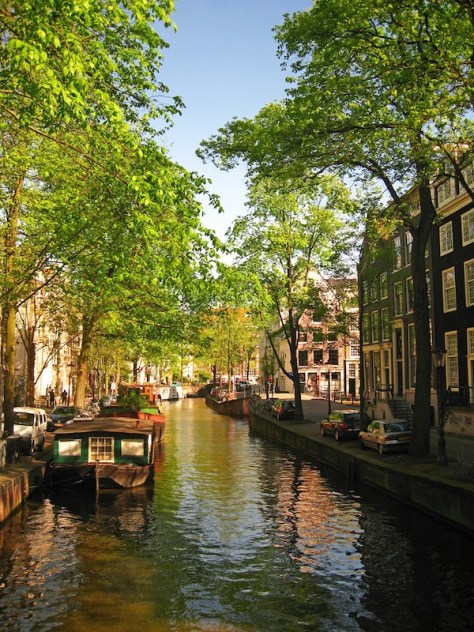 Amsterdam canal and tree. Photo MonicaVolpin