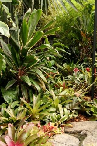 Brisbane subtropical garden