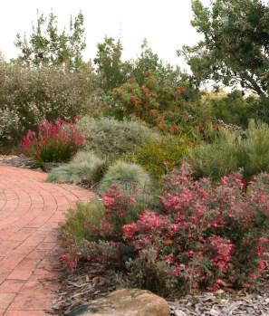 Cox native open garden on north-west Sydney