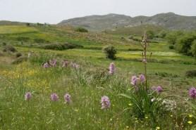 Mediterranean flower meadow