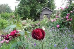 Sandra McMahon garden, Kilsyth
