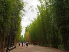 Bamboo groves. China