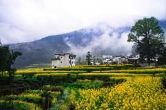 Canola or rape seed farm in China Photo DukeAsh