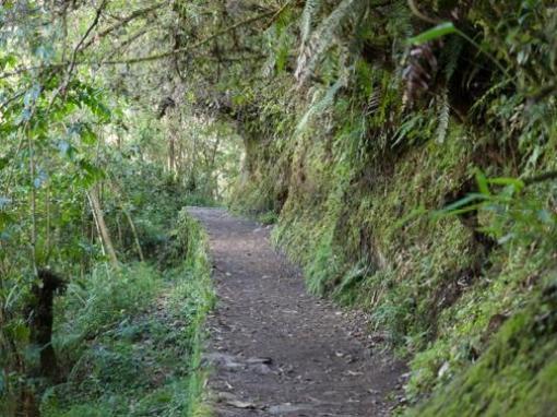 Path to the Inca Bridge