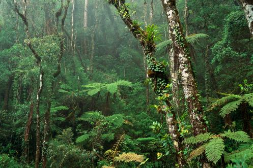 Rich greens of the tropical rainforest