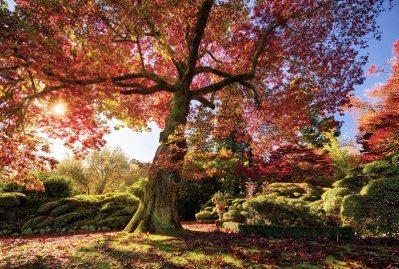 Blaze of Autumnal colour at Mount Wilson © Luke Zeme/Flickr