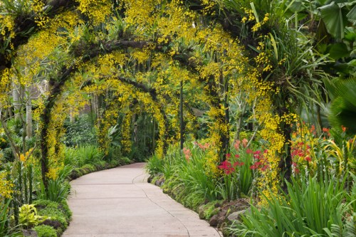 Orchid tunnel at Singapore Botanic Gardens