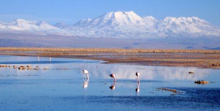 Flamingos, Chaxa Lagoon, Chile
