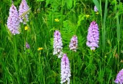 Le Noir Pre? Orchid Field Jersey