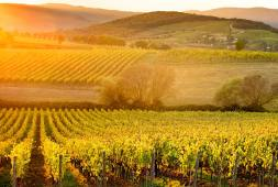 Autumn colours of the Chianti vineyards