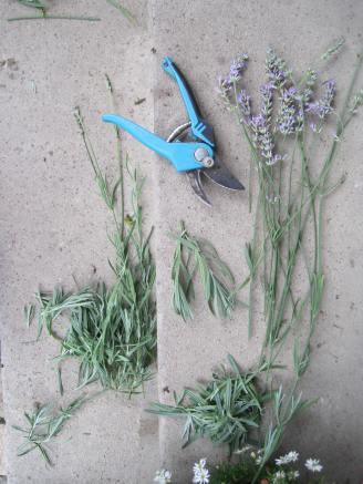 Lavendelschnittgut