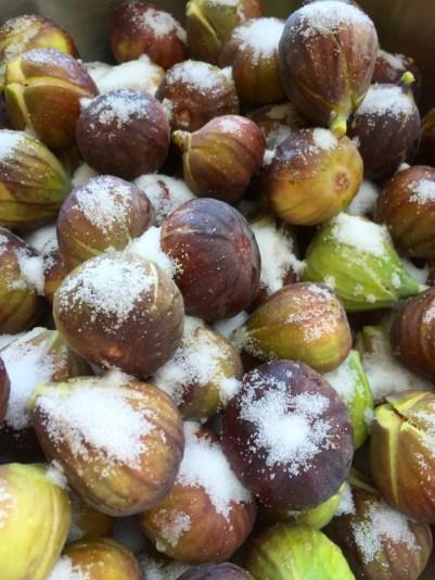 Nearly ripe figs