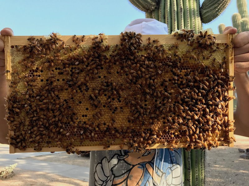 Hive Inspections: A checklist for how to do it and what to look for