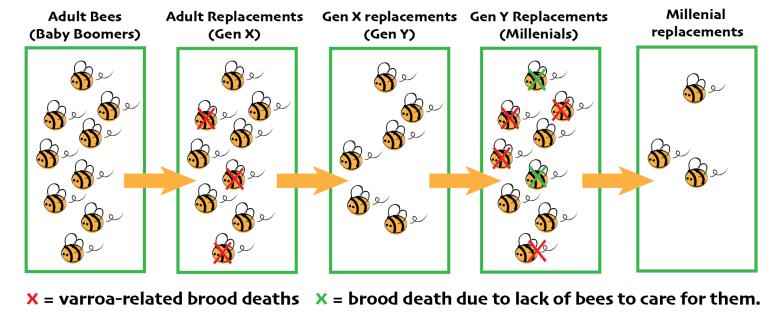 varroa graphic