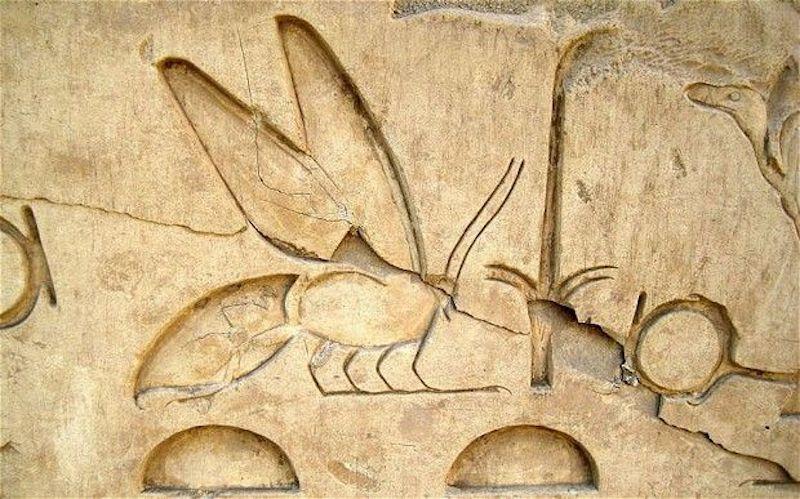 Honeybee History