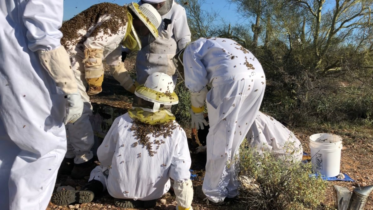 The Truth About Africanized Honeybees