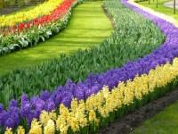Photos   The Worlds Largest Flower Garden   Garden Variety