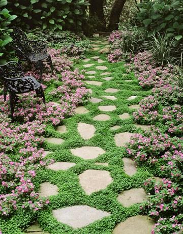 ground covers gardenwise