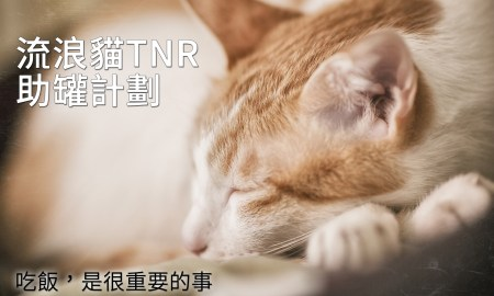 請支持流浪貓TNR計劃 助罐計劃