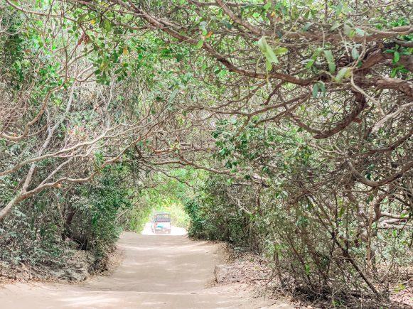 passeio leste jericoacoara túnel verde